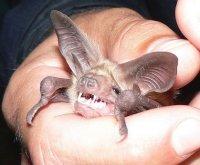 Зуби – важлива загальна ознака організації тварини.