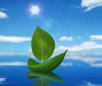 Чи мають рослини власну температуру тіла?