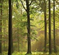 Амплітуди коливань температури лісу.