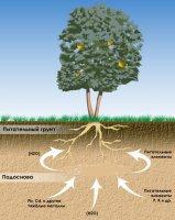 Вода в системі: грунт – рослина – атмосфера.