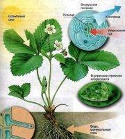 Водопостачання рослин і процес транспірації