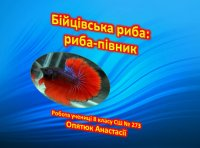 Презентація «Бійцівська риба: риба-півник»
