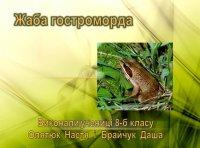 Презентація «Жаба гостроморда»