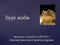 Презентація «Бурі жаби»
