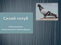 Презентація «Сизий голуб»