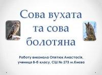 Презентація «Сова вухата та сова болотяна»