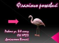 Презентація «Рожевий фламінго»