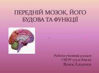 Презентація «Передній мозок»