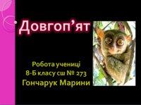 Презентація «Довгоп'ят»