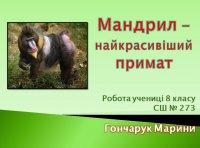 Презентація «Мандрил – найкрасивіший примат»