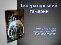 Презентація «Імператорський тамарин»