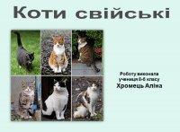 Презентація «Свійські коти»