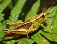 Особливості організації, що дозволили комахам стати «процвітаючим» класом серед безхребетних тварин.