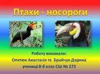 Презентація «Птахи-носороги»
