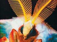 Органи чуттів, які дозволяють безхребетним тваринам орієнтуватися у просторі.