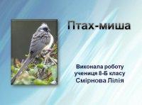 Презентація «Птах-миша»