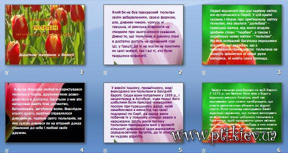 Презентація «Чи можемо ми тюльпан назвати українською квіткою»