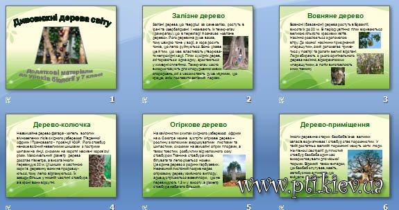 Презентація «Дивовижні дерева світу»