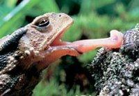 З чим пов'язана наявність у тварин різних виростів у вигляді гачків, шипів, щупиків, жал, кошичків, присосок …?