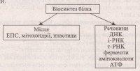 """Розробки уроків до теми """"Цитоплазма, її компоненти"""" (10 кл.)"""