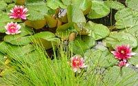 Основні пристосування вищих рослин до водного середовища існування.