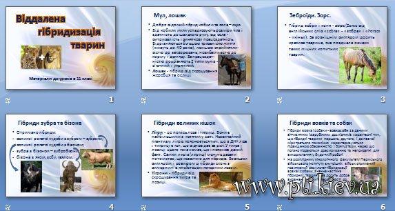 Презентація «Віддалена гібридизація тварин»