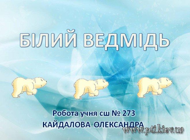 Презентація «Білий ведмідь»