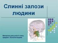 Презентація «Слинні залози людини»