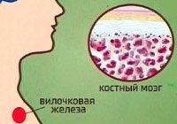Учням про загадкову залозу – Вилочкову.