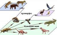 """Розробки уроків до теми """"Історичний розвиток органічного світу. Основи еволюційного вчення."""" 11 клас (згідно нової програми, рівень стандарту)"""