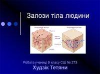 Презентація «Залози тіла людини»