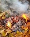 Чому небажано спалювати листя?