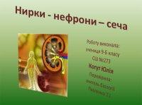 Презентація «Нирки – нефрони – сеча»