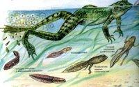 Причини метаморфозів у процесі розвитку тварин