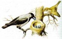 Полювання за яйцями