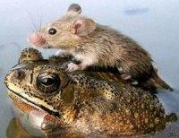 Дослідження поведінки тварин