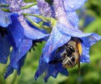 Морфологія нектарників квіток