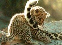 Хвіст та його положення – складна азбука мови тварин