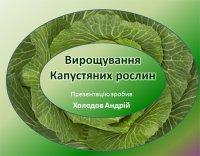 Презентація «Вирощування капустяних рослин»