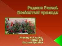 Презентація «Родина Розові. Поліантові троянди»
