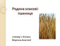 Презентація «Родина злакові: пшениця»