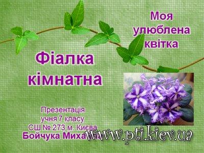 Презентація «Моя улюблена квітка – фіалка кімнатна» (Павленко ...