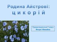 Презентація «Родина Айстрові: цикорій»