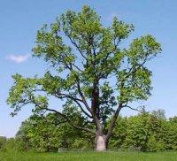 Еволюційні взаємовідносини дерев і трав