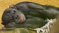 Хто як спить: життя як сон.