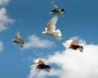 Типи польоту птахів