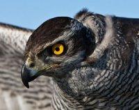 Зорові світи птахів