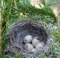 Різнобічна характеристика пташиних яєць