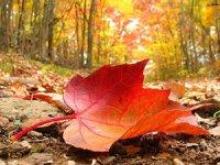 Листопад – «море барв осені»