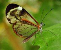 Крила – органи комах з аеродинамічними властивостями